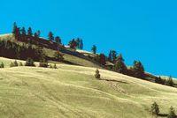roll-hill